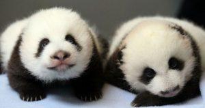 Видео про первые 100 дней малюток-близняшек. Невероятная милота!