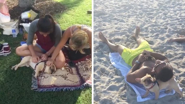 Очаровательный бульдожка обожает знакомиться с людьми на пляже