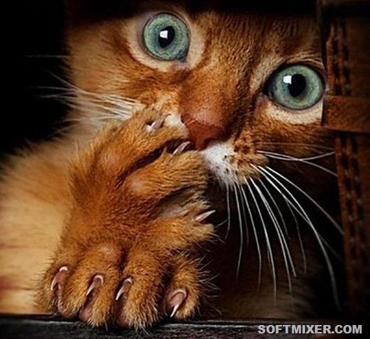 20 любопытных фактов от заводчика кошек