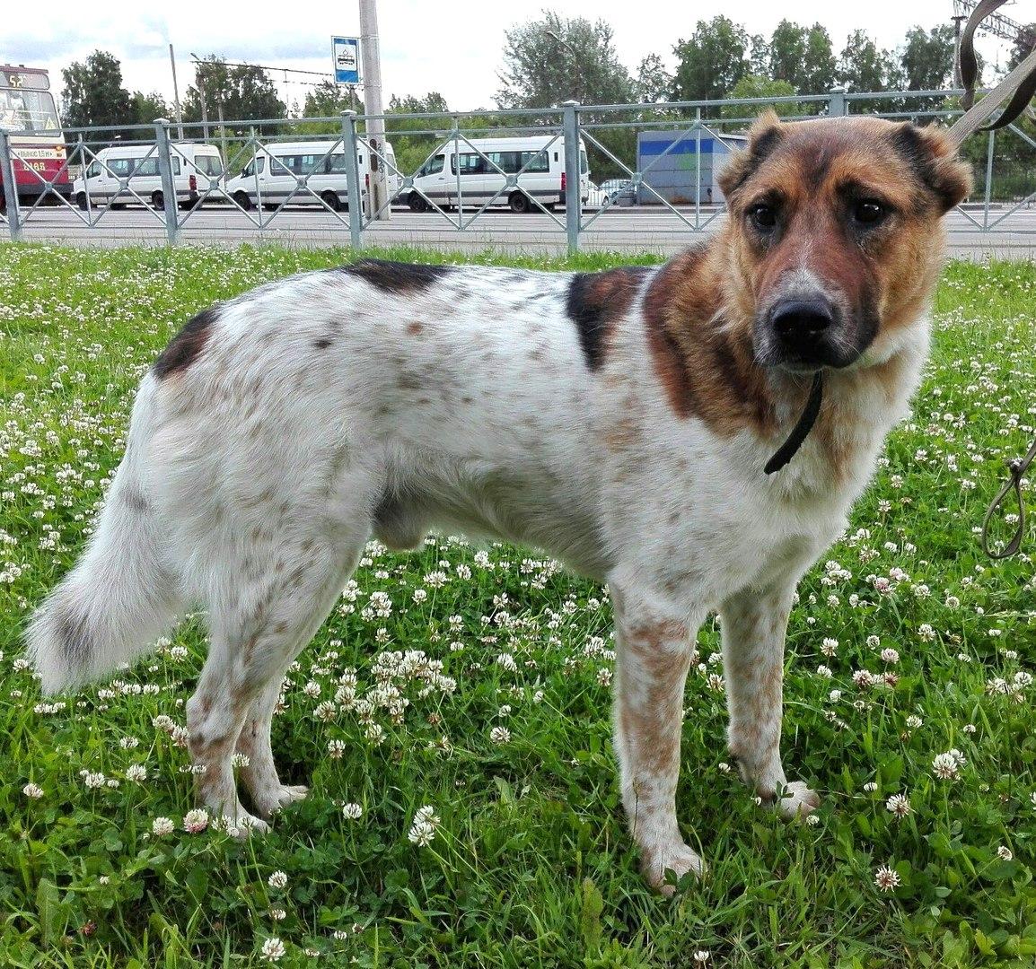 Приютский пёс понял, что домой его не возьмут… Но у него имелся хитрый план