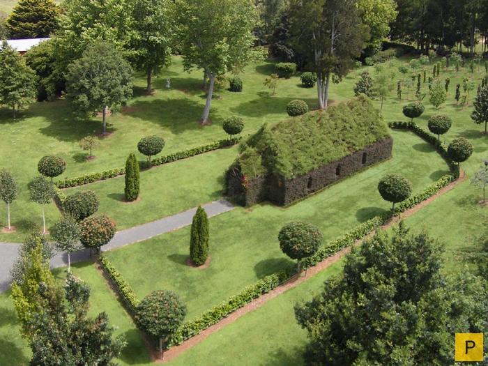 Храм из живых деревьев в Новой Зеландии