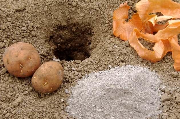 Всегда с урожаем картошки
