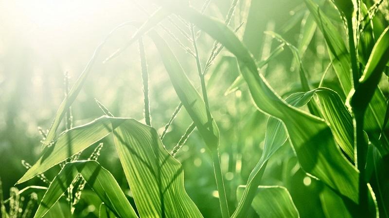 Подвесьте мыло в мешочках в саду и огороде - результат вас удивит!