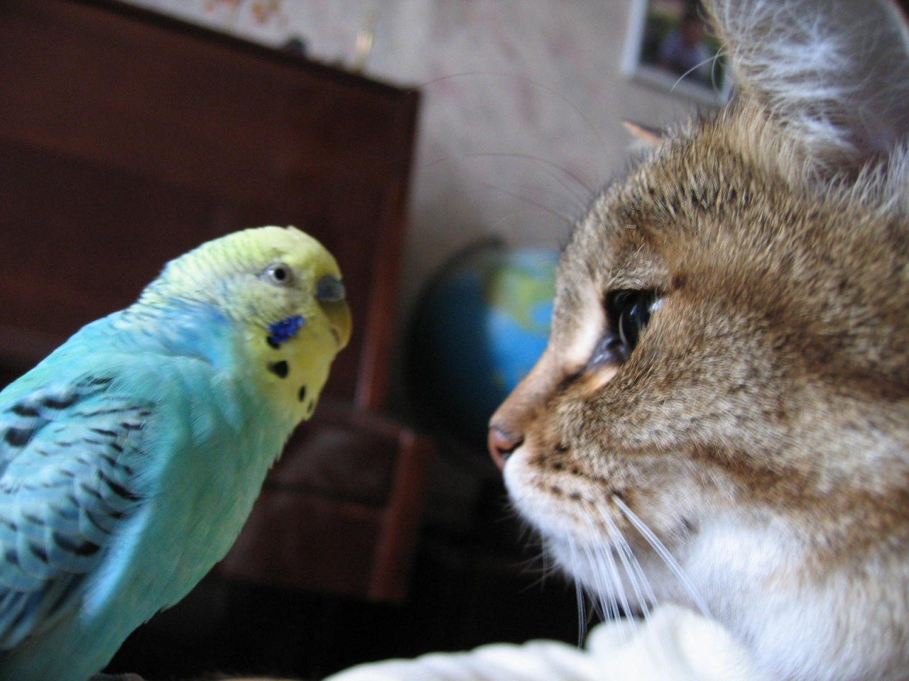 Попугай достает кота. Очень смешное видео.