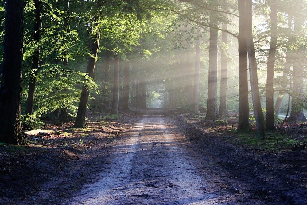 Польша отдала США для вырубки 38 гектаров охраняемых лесов
