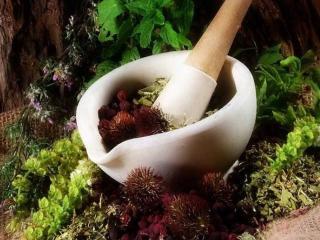 Отхаркивающие травы - натуральные средства для лечения сухого и мокрого кашля в домашних условиях.