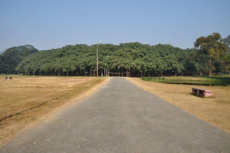 Огромный лес всего из одного дерева