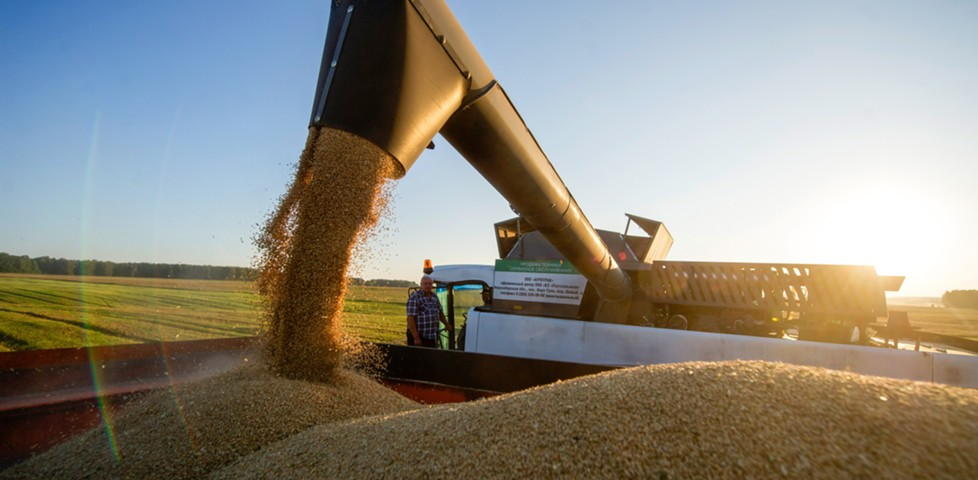 Российская пшеница бьет по американским фермерам