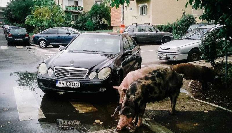 Румыния как она есть: фотопроект о настоящей Румынии