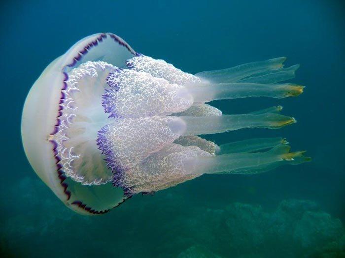 Опасные для человека «жители» Черного моря