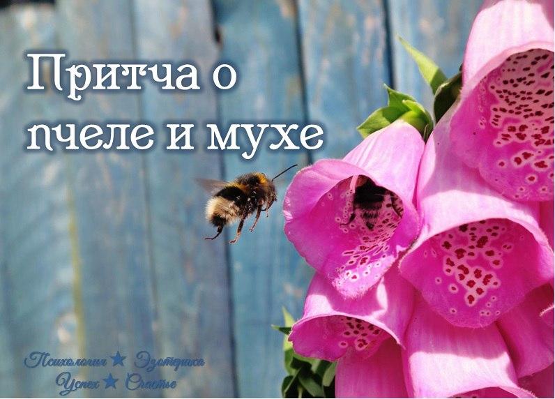 Притча о пчеле и мухе: для тех, кто привык обвинять других