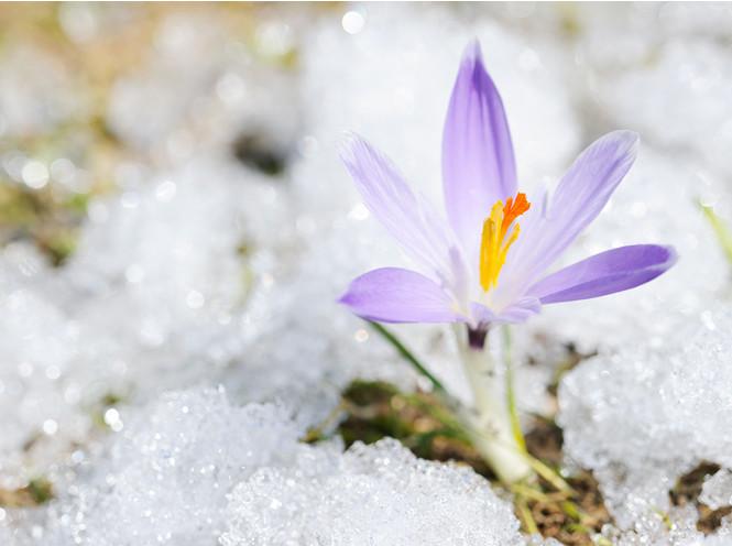 Гороскоп на весну 2018 по зн…