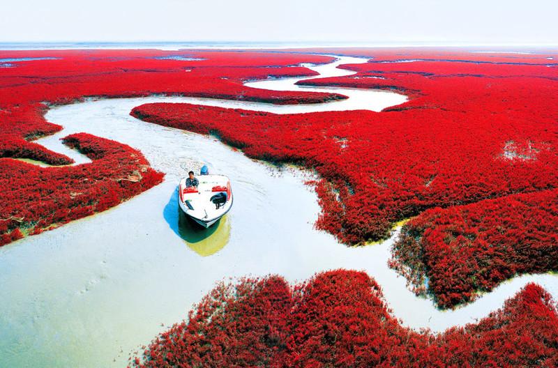 Красный пляж Паньцзинь, Китай в мире, красота, пейзажи, планета
