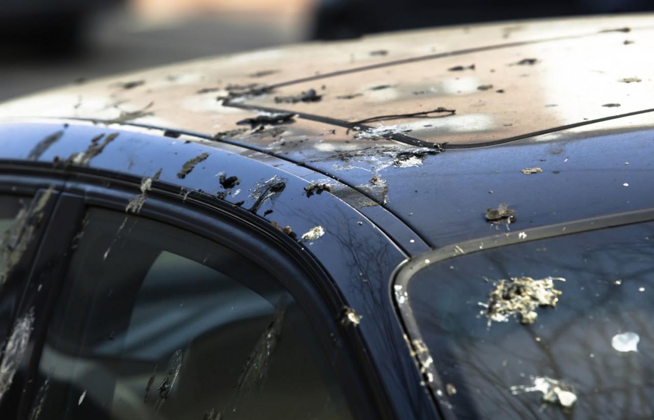Почему птичий помет с машины нельзя оттирать водой и тряпкой?