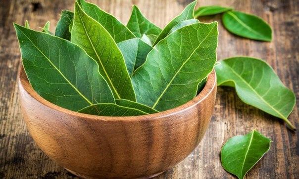 Лавровый лист - необычные и полезные свойства