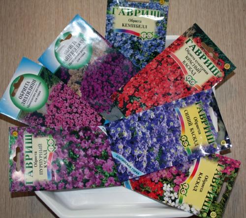 Как вырастить обриетту из семян: рассадный и безрассадный способ