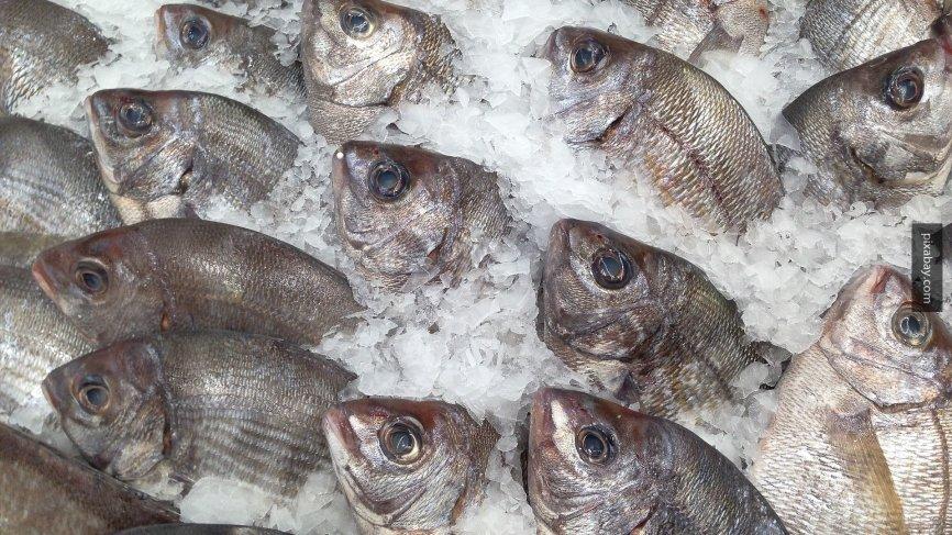 Японские СМИ рассказали о возрождении рыбной отрасли России после кризиса 90-х