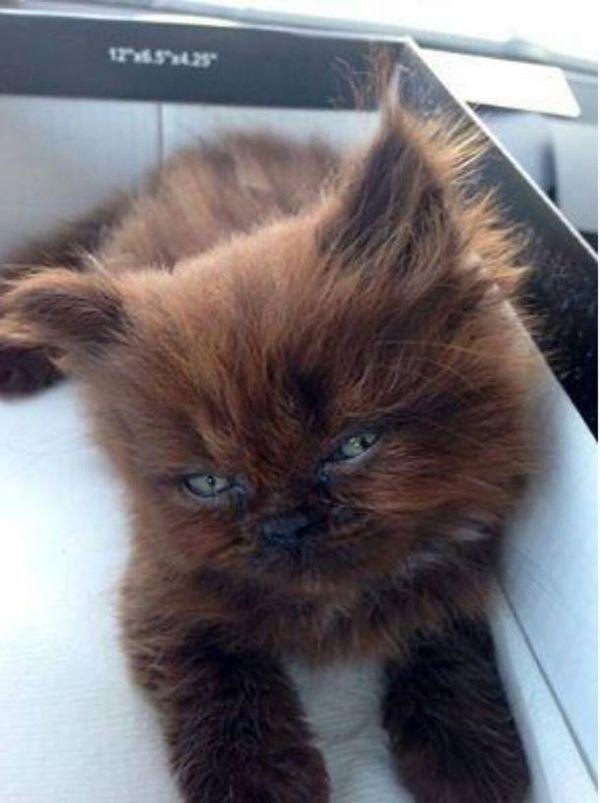 Девушка дала приют маленькой больной кошке. Через год ее ждал большой сюрприз