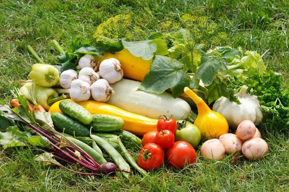 Большой урожай по методу Картелева - вся хитрость...в траве!