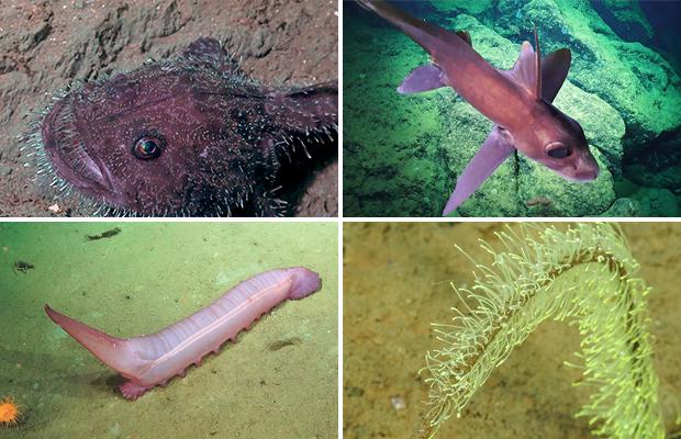 Морской чёрт и загадочные черви