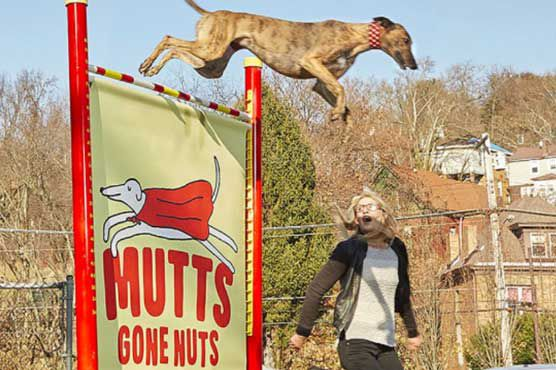 Собаки из Мэриленда допрыгались до Книги рекордов Гиннесса