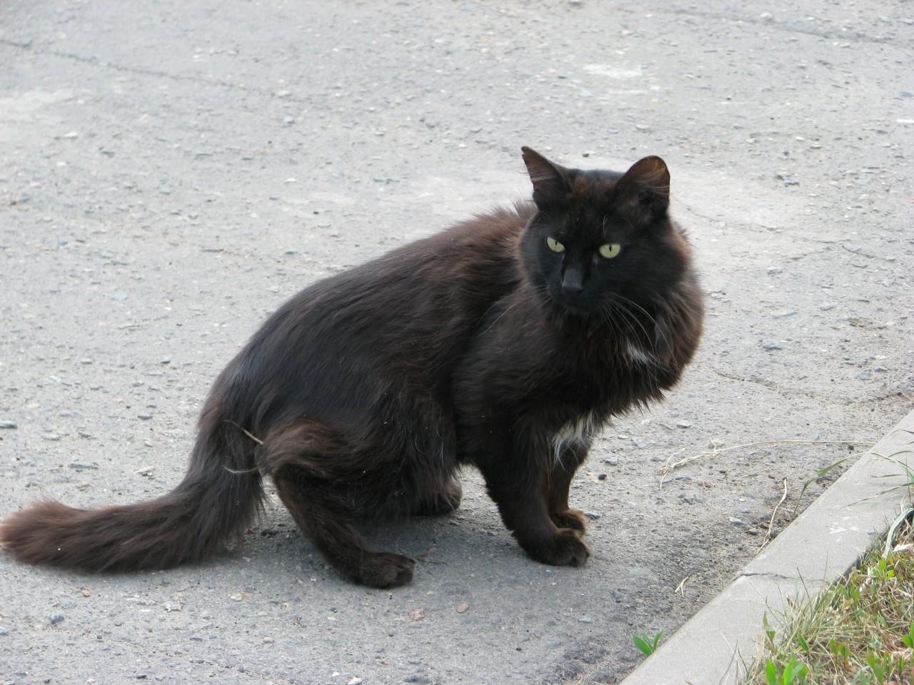 Братья наши меньшие: как кошка на валериану