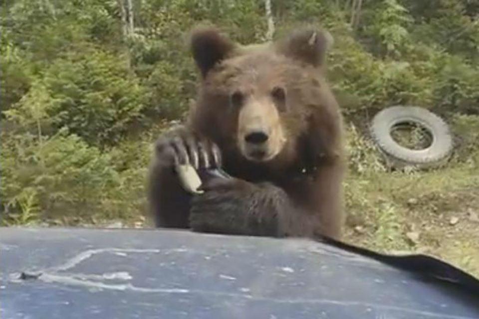 Медведь пропускает дальнобойщиков на трассе за пряники!