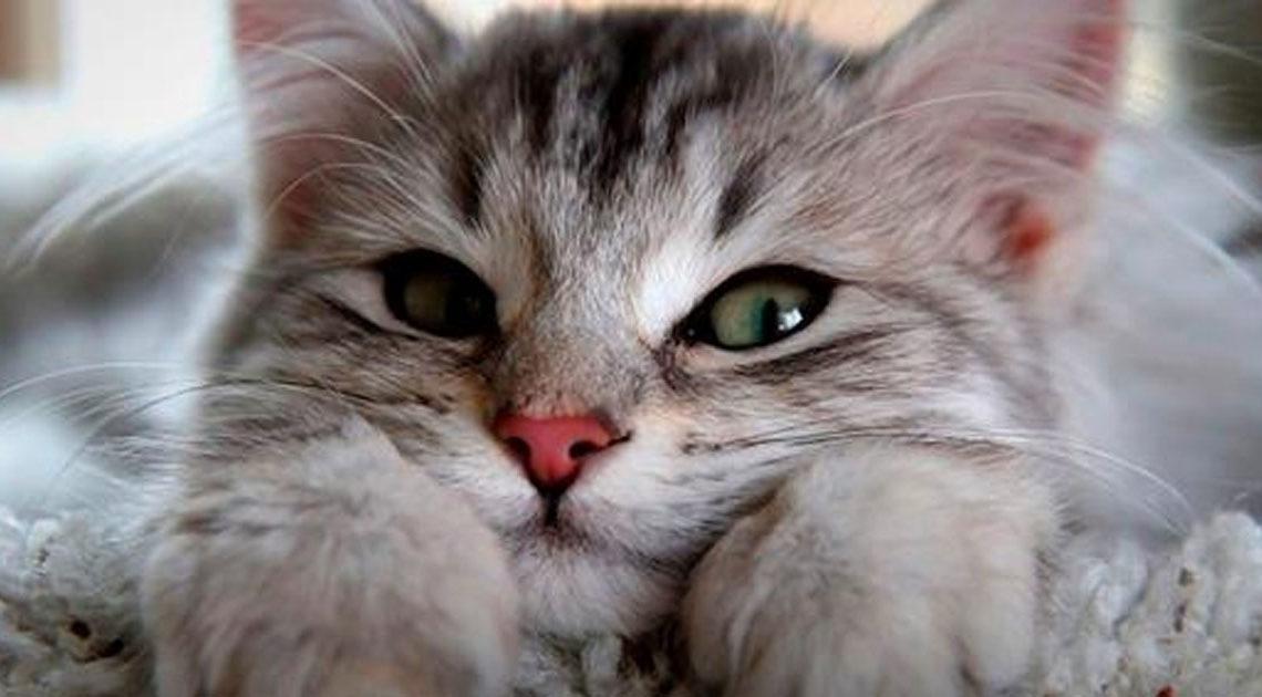 Как понять вашего котика: сп…