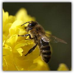 Пчела и муха. Притча.