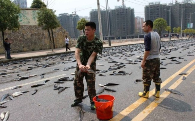 Живая рыба на дорогах Китая