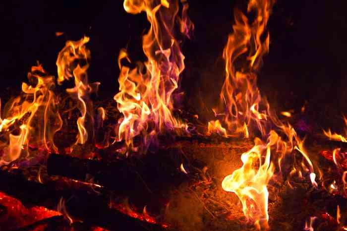 История огненного цветка
