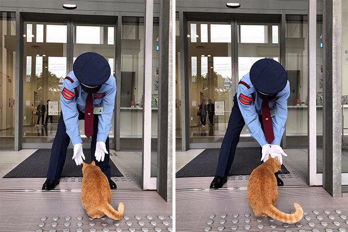 Два кота в Японии три года пытаются попасть в музей