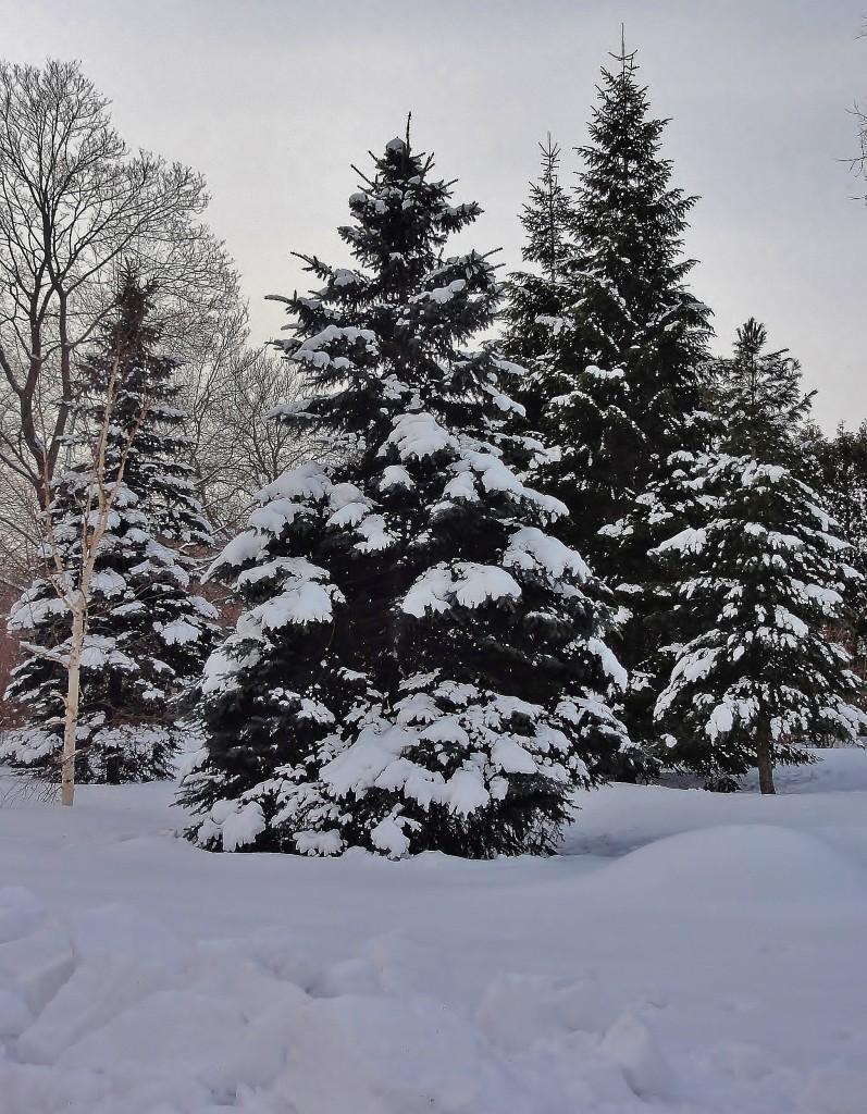 Снежная зима ...