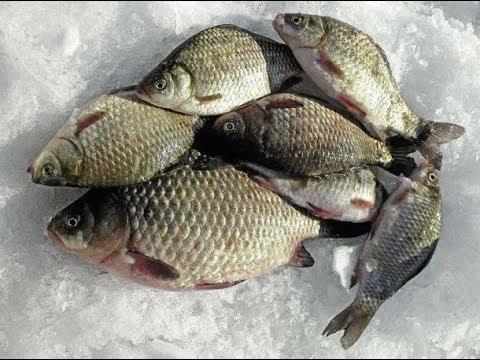 Ловля карася зимой на мормышку  Рыбалка в декабре, январе, феврале