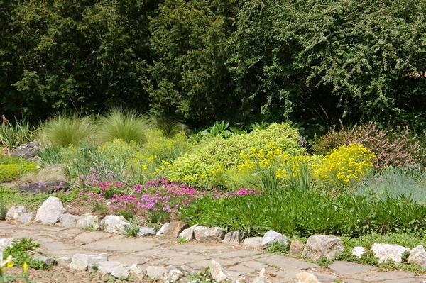 10 растений для засушливых участков