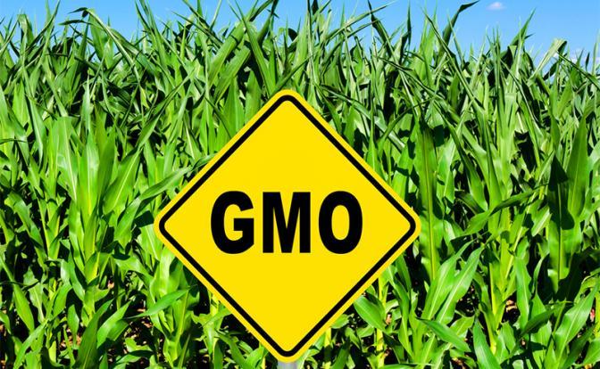 Подводные камни вреда ГМО