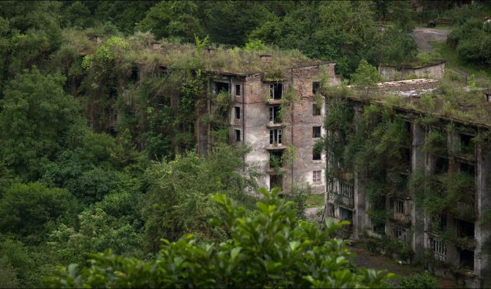 Субтропический лес наступает на вымерший поселок. /Фото:ratnik161.ru