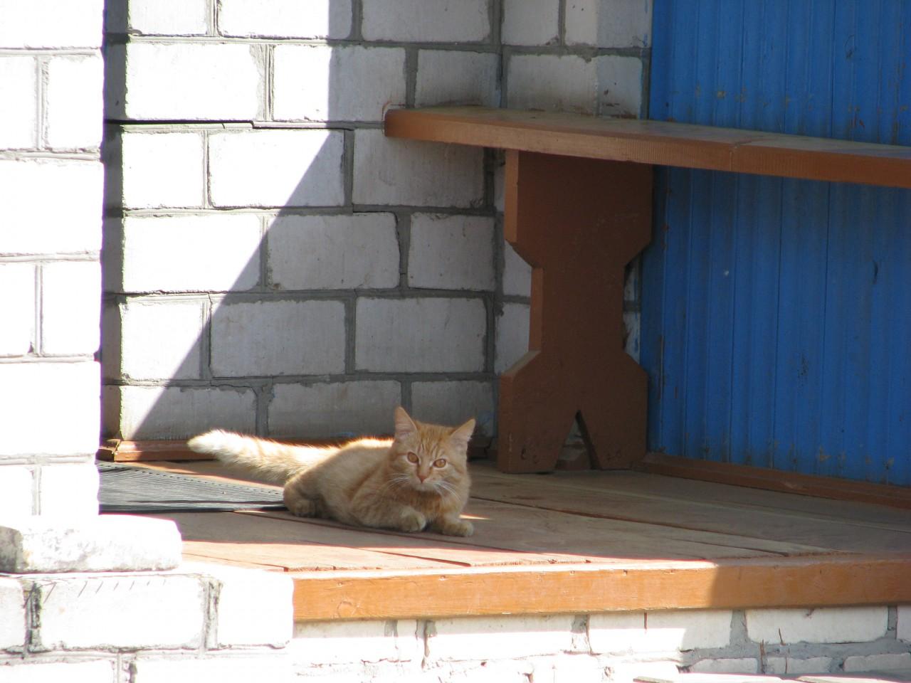 Братья наши меньшие: кошка и здоровье человека