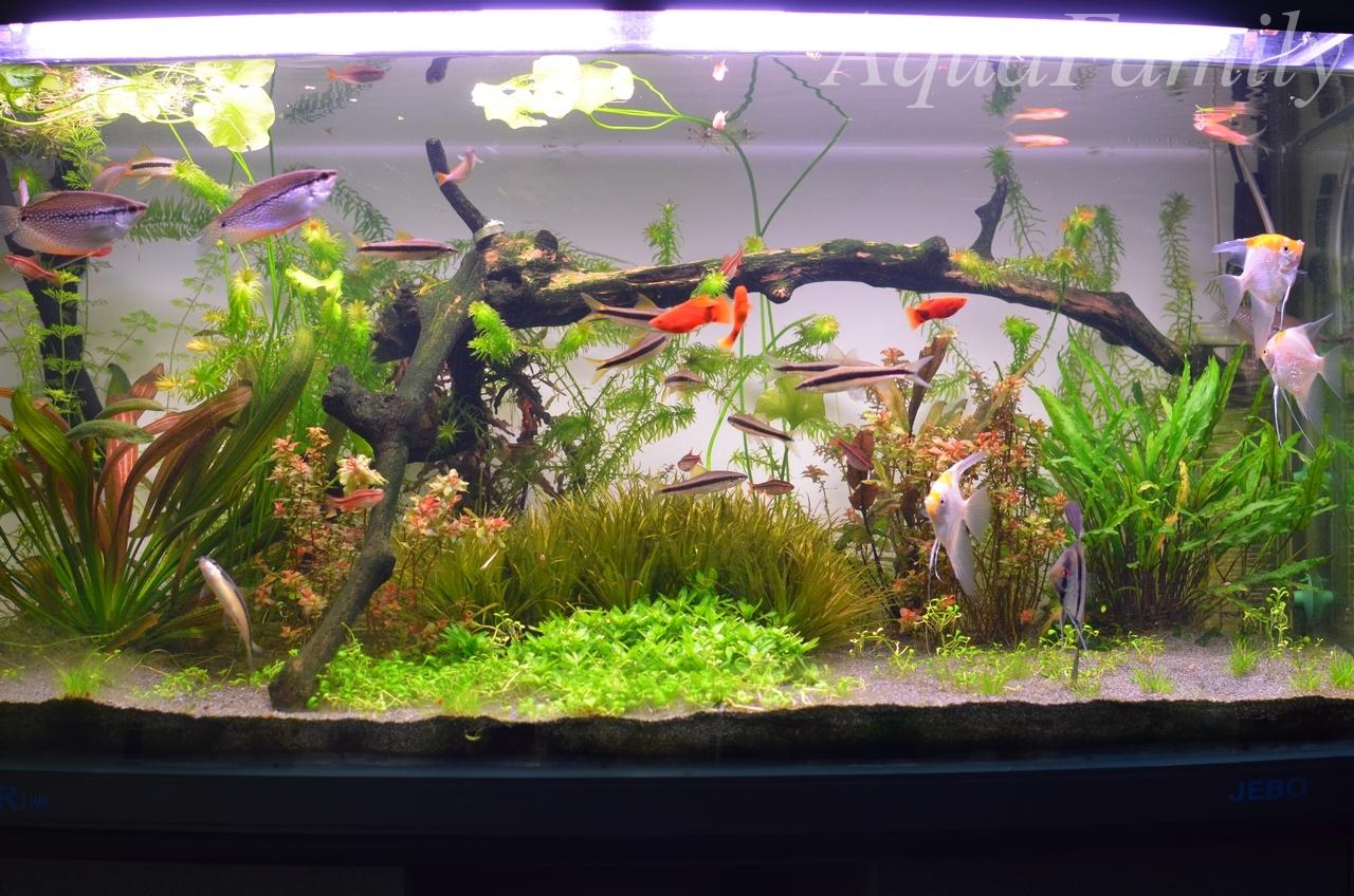 Голландский аквариум или растительный мир под водой