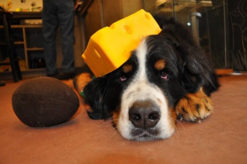 «К черту пивной пинг-понг, мы играем в сырных собак»: новый флешмоб покоряет интернет
