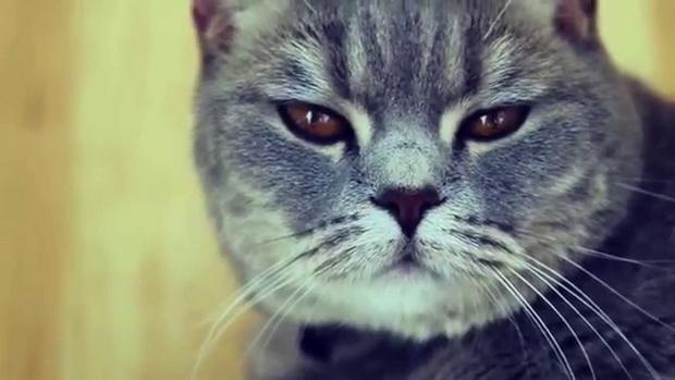 Гагарин, я вас любила…
