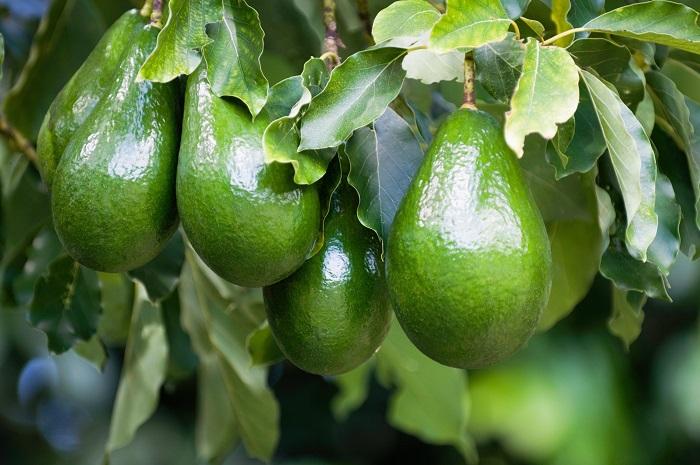 вред авокадо для мужчин