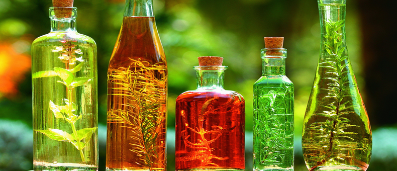 10 растений и трав против головной боли