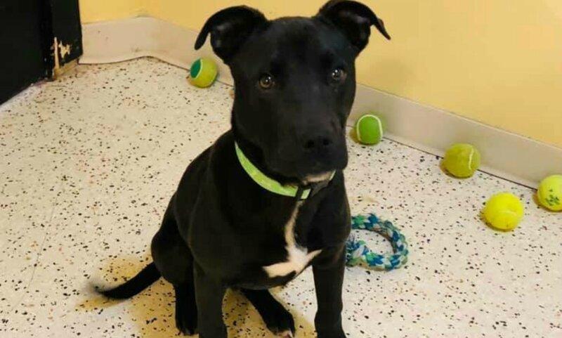 Второй шанс: брошенный щенок чудом выжил после эвтаназии