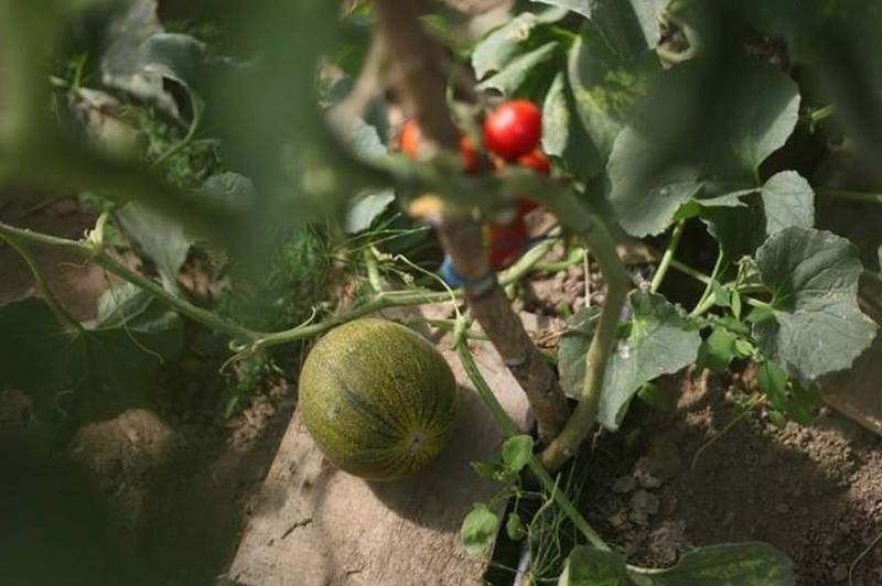 Энтузиасты органического земледелия