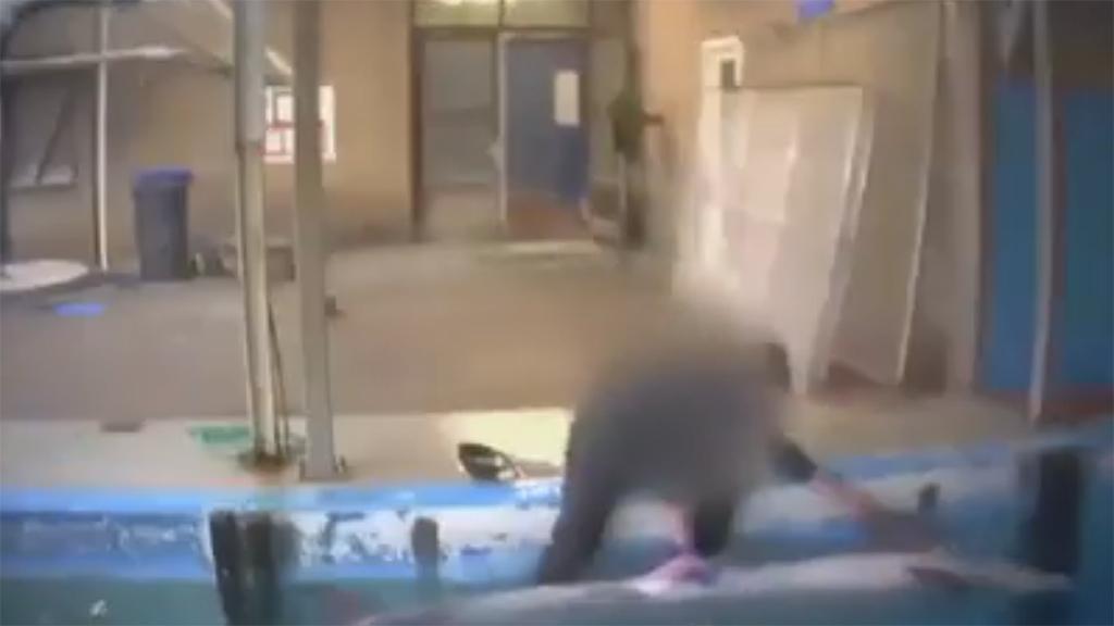 Секс дельфина с человеком записали на видео