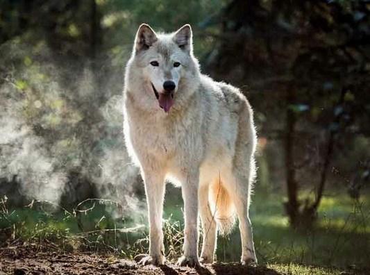 Волк пришёл в местную больни…