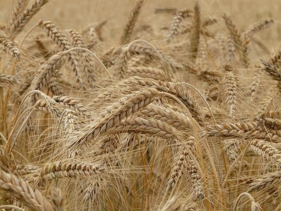 КНДР попросила у России бесплатно 50 млн тонн пшеницы