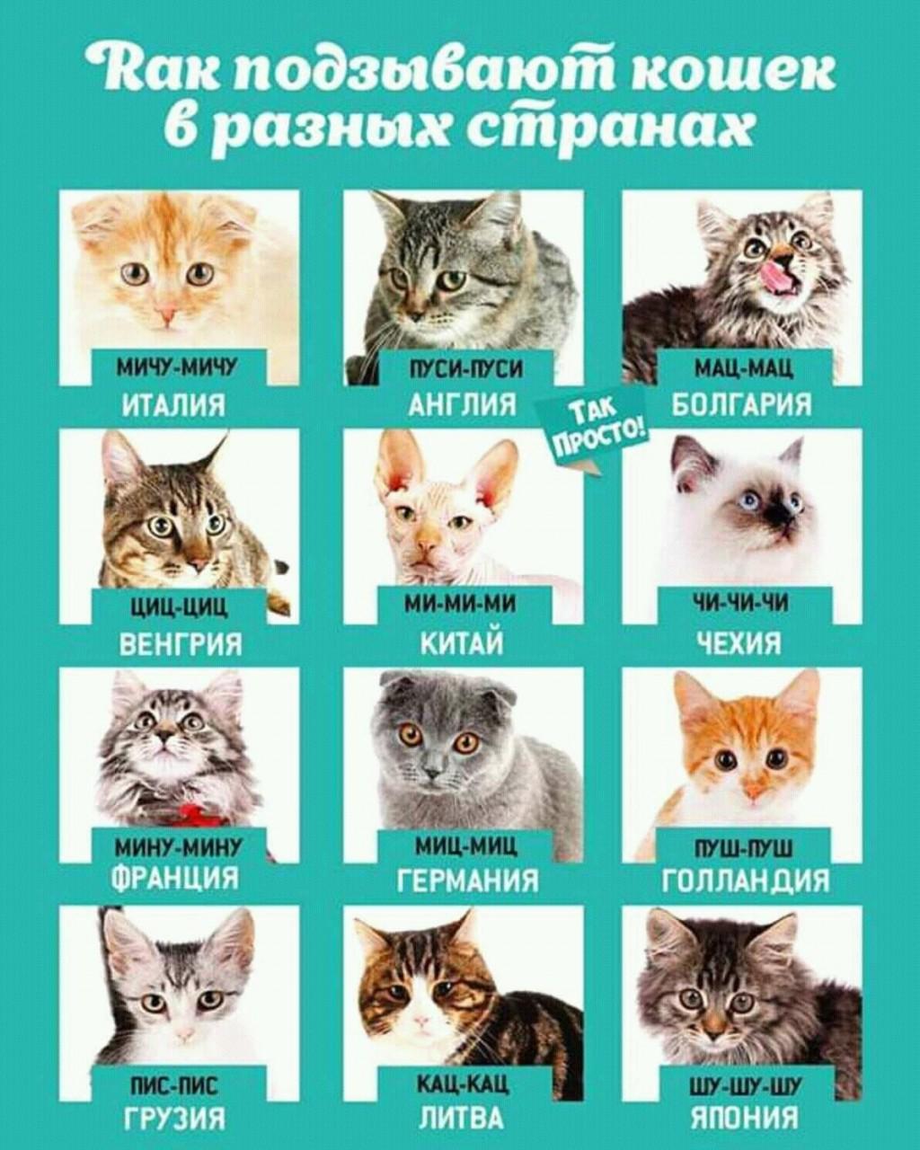 Котики разных стран