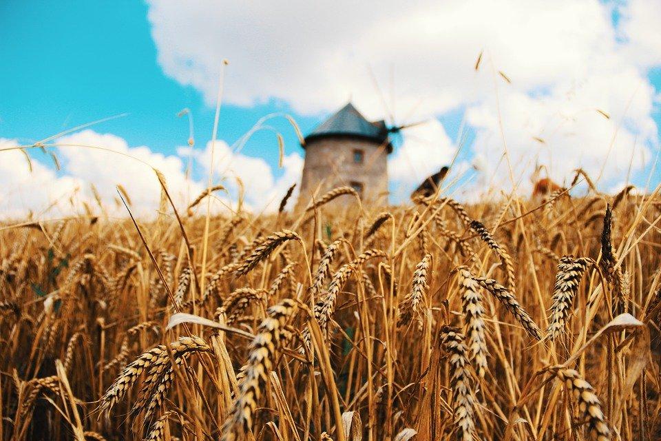 Россия – лидер зернового рынка: эксперт объяснил, почему только РФ может помочь Африке с проблемами производства